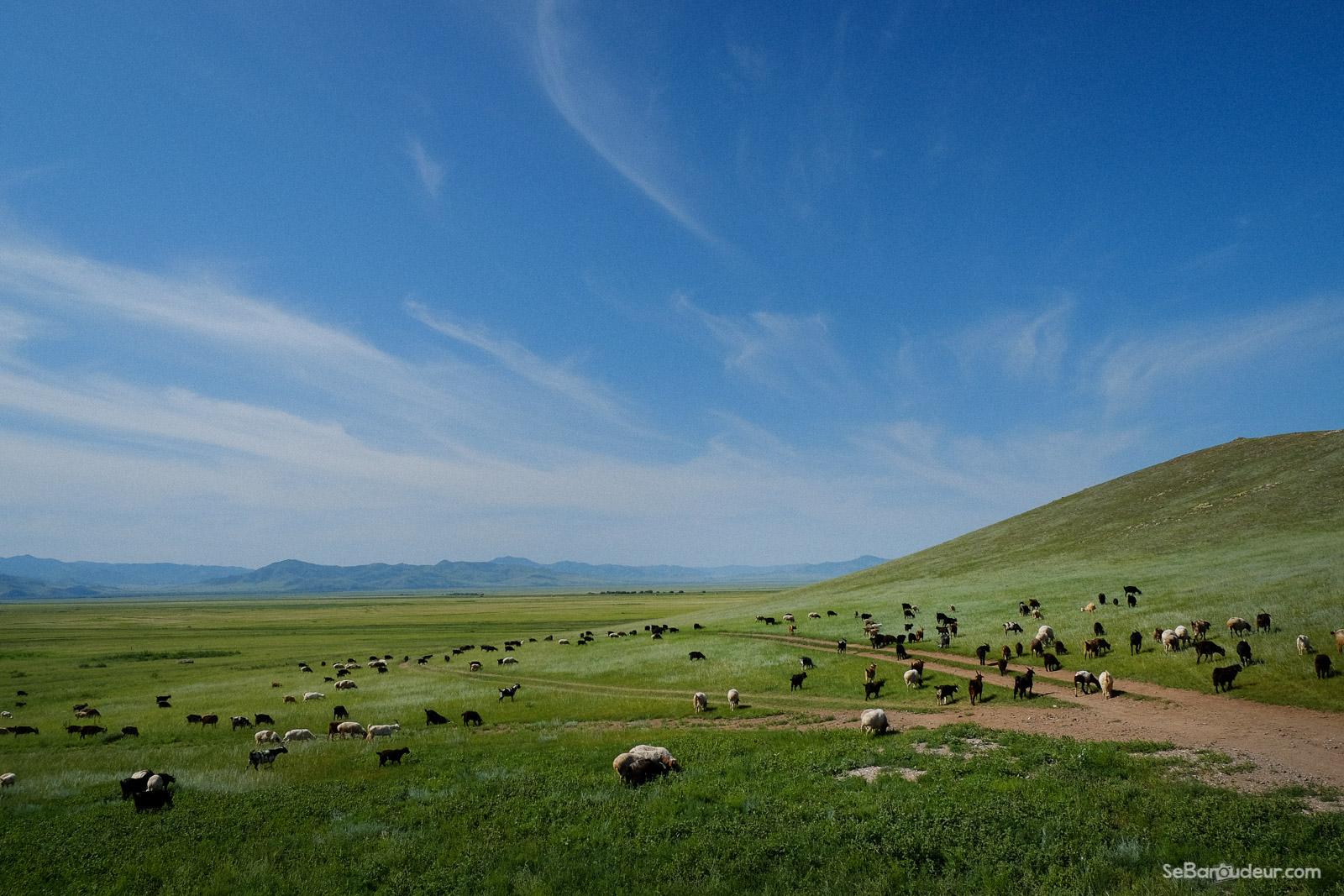 Khatgal J135 Mongolie